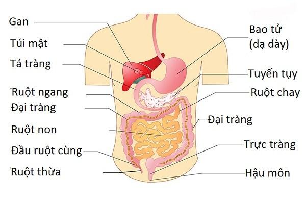 Chăm sóc chức năng đường ruột sau chấn thương tủy sống